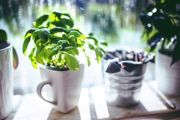 6 Herbs to Kickstart Your Kitchen Garden