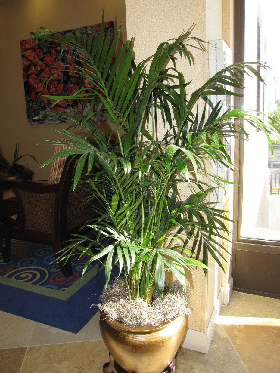 Grow Fresh Air at home with Easy Indoor Plants | Housing News
