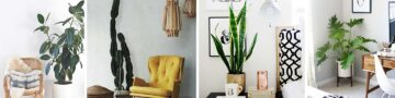 Home Décor With Unusual Indoor House Plants