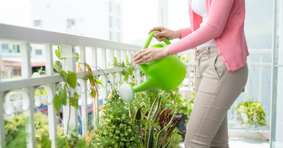 Maintenance aspect and laws governing plants at home